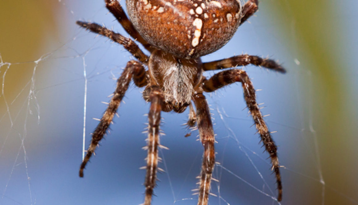 Spider Pic by Quentin Furrow